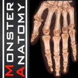 Monster Anatomy membre supérieur