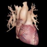 Cardiological - iPhone Edition
