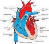 Exploration échographique d'une insuffisance cardiaque